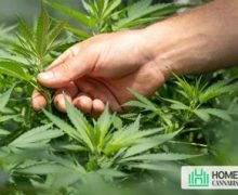 Indoor Cannabis Growing Too Big? How To Stop Them?
