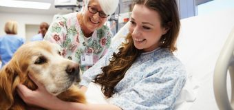 How Is Dog Therapy Helping People To Overcome Mental Issues?