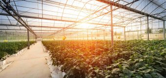 Greenhouse: a perfect blend of farming and technology!!