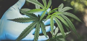 Cannabis Products: An Explanation of Hashish and its Use